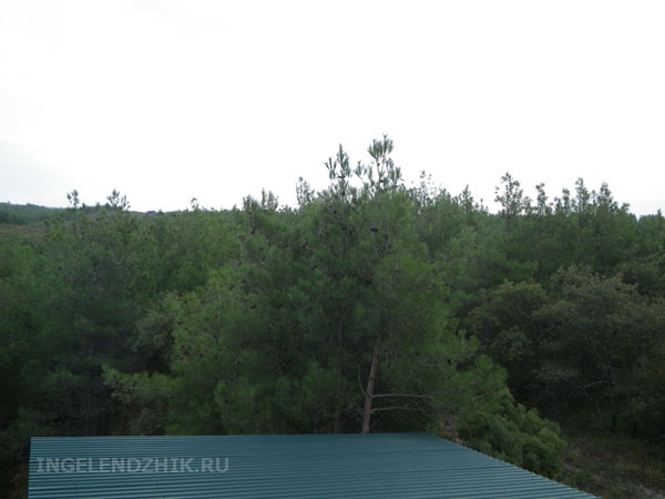 Gelendzhik private sector. Photo of the view from the window on the forest